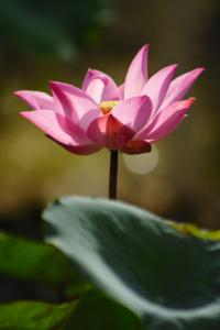 Yoga Nidra Kurs Bayreuth